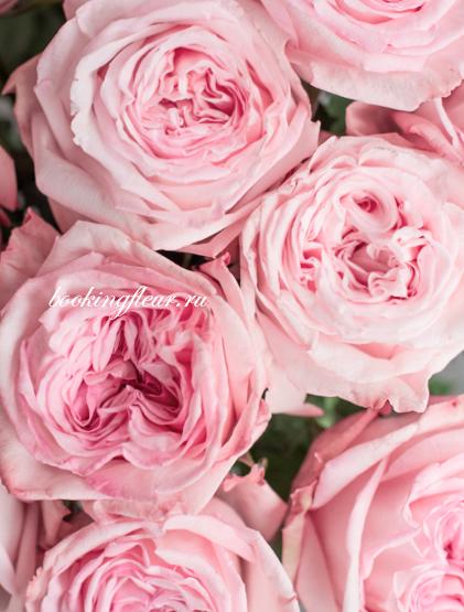 Монобукет из 11 роз Pink O'Hara