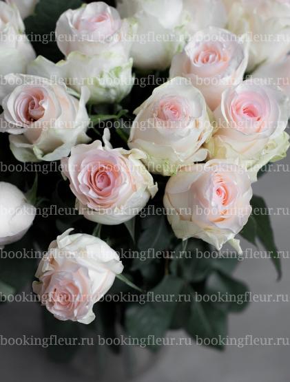 Монобукет из 25 роз Senorita