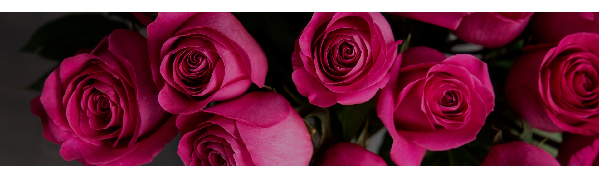 Классические розы