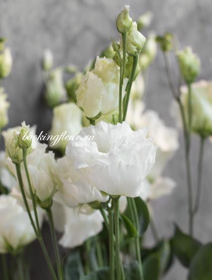 Эустома Celebrich White