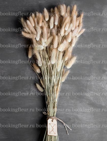 Лагурус натуральный (сухоцвет)
