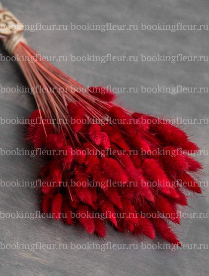 Лагурус красный (сухоцвет)