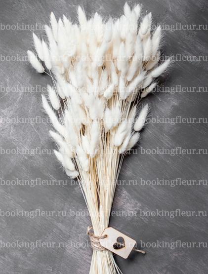 Лагурус белый (сухоцвет)