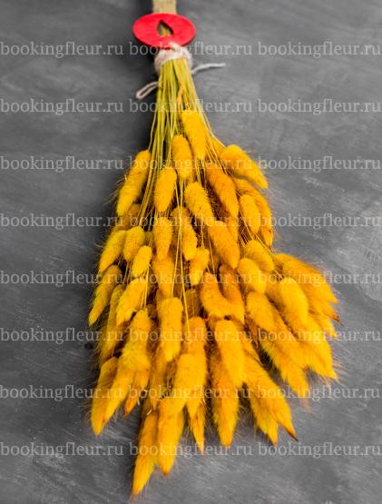 Лагурус желтый (сухоцвет)