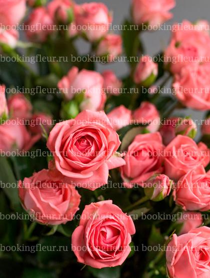 Кустовая роза Barbados