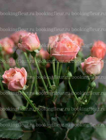 Кустовая роза Bridal Bubbles