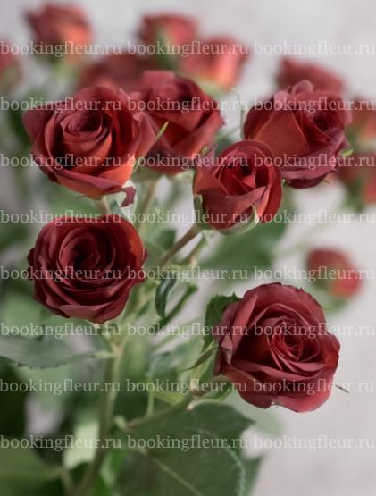 Кустовая роза Chococcino
