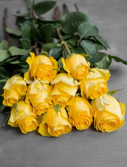 Классическая роза Brighton