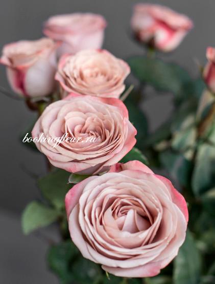 Классическая роза Cappucino