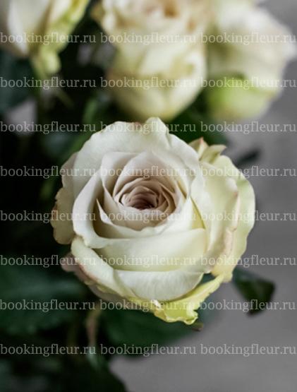 Классическая роза Early Grey
