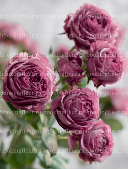Кустовая роза Hype