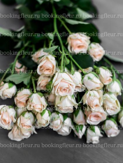 Кустовая роза Jana