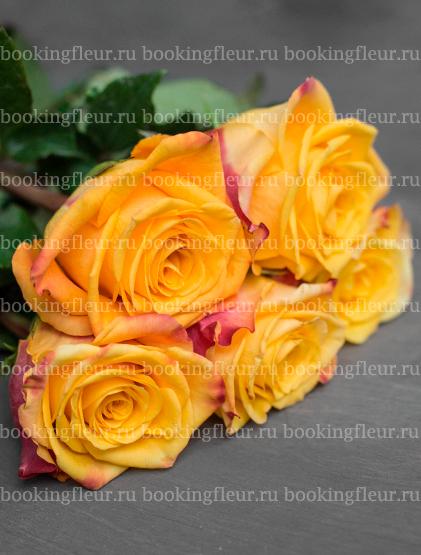 Классическая роза Marie Claire