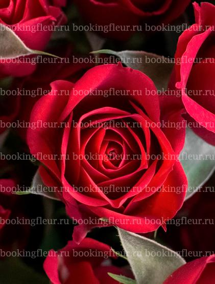 Кустовая роза Mirabel