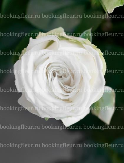 Кустовая роза Miss Bombastic