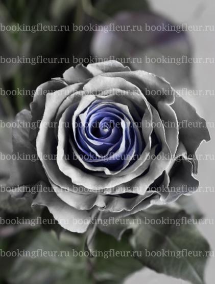Классическая роза Mondial Gray