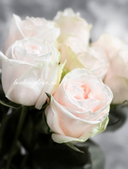 Пионовидная роза Garden Spirit