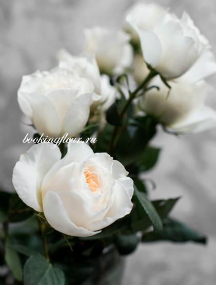 Пионовидная роза White Cloud