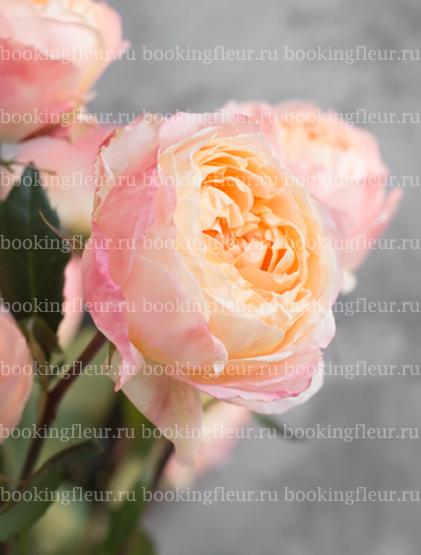 Пионовидная роза Princess Aiko
