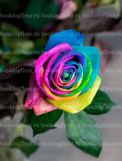 Классическая роза Vendela Rainbow
