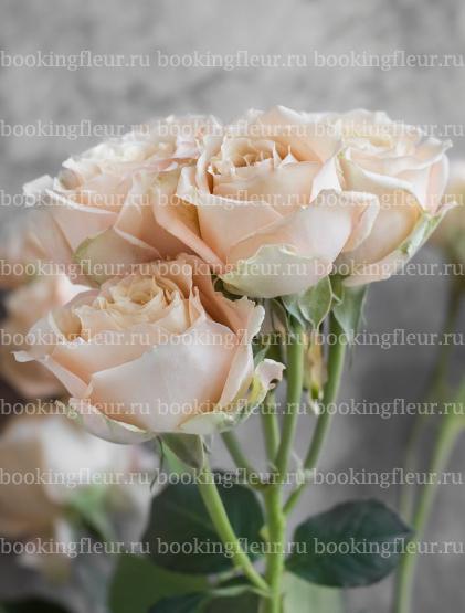 Кустовая роза Sahara