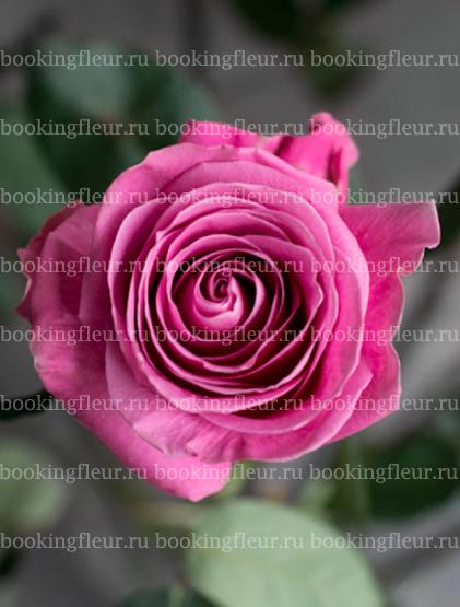 Классическая роза Soulmate