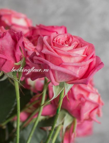 Кустовая роза Sweet Bubbles