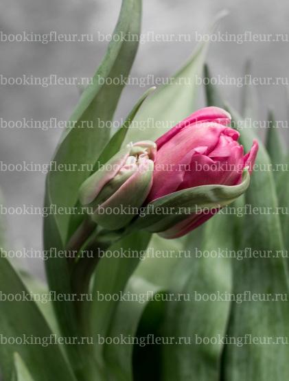 Тюльпан Dior