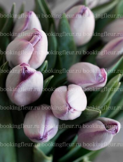 Тюльпан Jacuzzi
