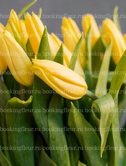 Тюльпан Strong Gold