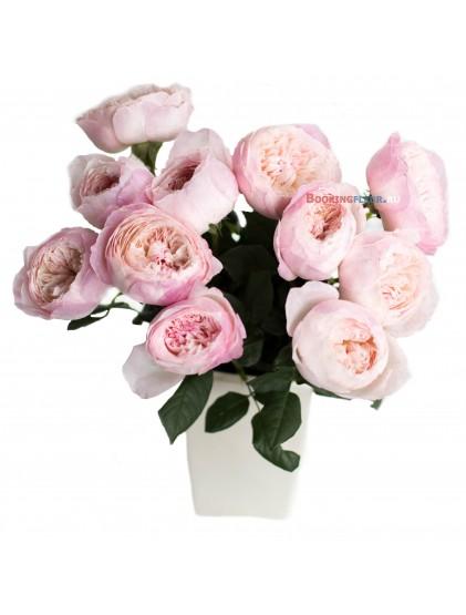 11 пионовидных роз DAVID AUSTIN CONSTANCE