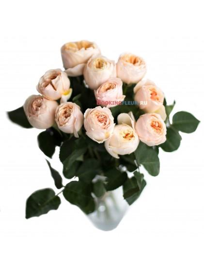 11 пионовидных роз DAVID AUSTIN JULIET