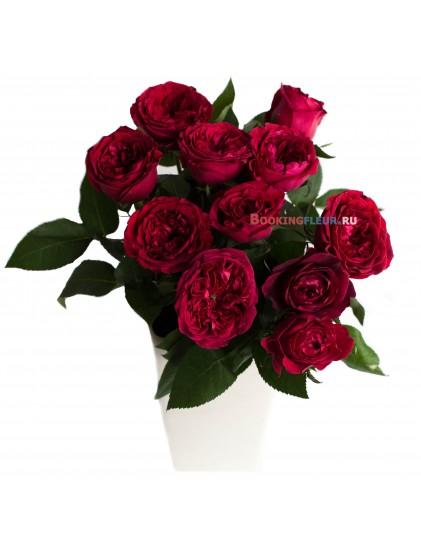 11 пионовидных роз DAVID AUSTIN TESS