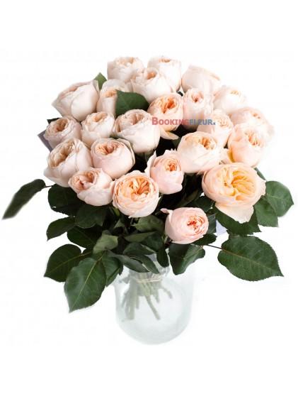 23 пионовидные розы DAVID AUSTIN JULIET